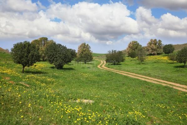 Оформление земельного участка в собственность
