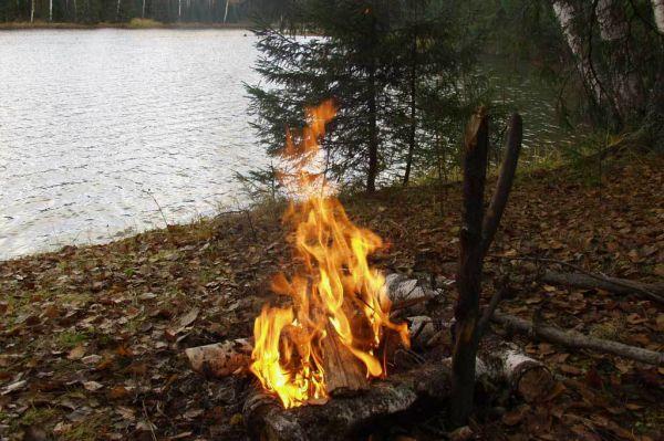 Размеры штрафного взыскания за костёр в лесной полосе
